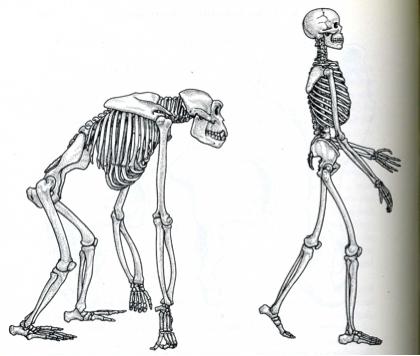 is intelligent design viable? craig-ayala debate | reasonable faith, Skeleton