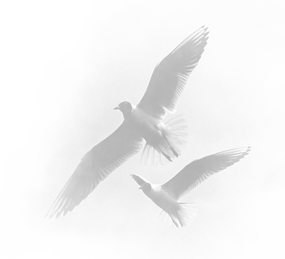 Image of birds flying.